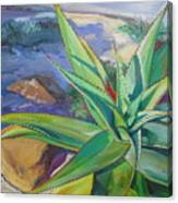 Aloe Vera Number Two Canvas Print