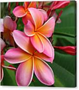 Aloha Lei Pua Melia Keanae Canvas Print