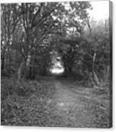 Along A Woodland Path Canvas Print