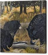 Along An Autumn Path - Black Bear With Cubs Canvas Print