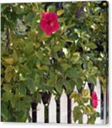 Along The Picket Fence Canvas Print