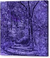 Along The Windowpane Path Canvas Print