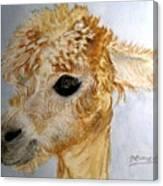 Alpaca Cutie Canvas Print