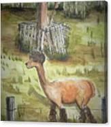 Alpaca Glory Canvas Print