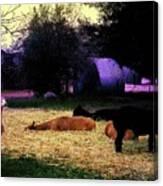 Alpacan Twilight Canvas Print