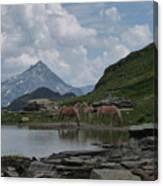 Alps' Horses Canvas Print