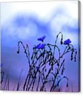Montana Blue Bells Canvas Print