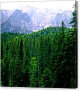 Alpine Forest Canvas Print