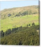 Alpine Forest Landscape.  Canvas Print