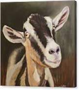 Alpine Goat Canvas Print