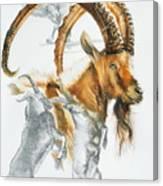 Alpine Ibex Canvas Print