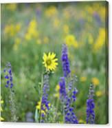 Alpine Sunflower Canvas Print