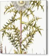 Alpine Thistle Canvas Print