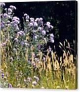 Alpine Thistles And Grasses Canvas Print