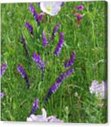 Alpine Vetch And Primroses Canvas Print