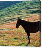 Altay Canvas Print