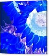 Alternate Reality Sunflower Canvas Print