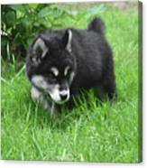 Alusky Puppy Dog Spotting A Toy To Play With Canvas Print