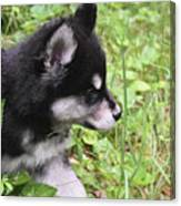 Alusky Puppy Tip Toeing Through Green Foliage Canvas Print