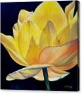 Amarella Canvas Print
