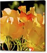 Amarillo 003 Canvas Print
