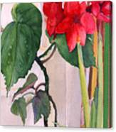 Amaryllis And Begonia Canvas Print