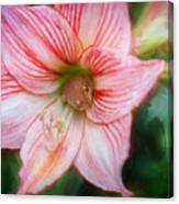 Amaryllis And Tree Frog Painted  Canvas Print