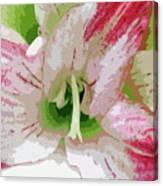 Amaryllis Center Canvas Print