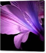 Amaryllis Glow Canvas Print