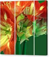 Amaryllis Triptych Canvas Print