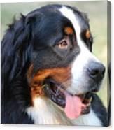 Amazing Bernese Mountain Dog Canvas Print