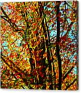 Amazing Fall Foliage Canvas Print