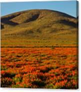 Amazing Poppy Fields Canvas Print