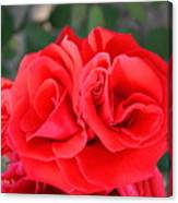 Amazing Rose Canvas Print