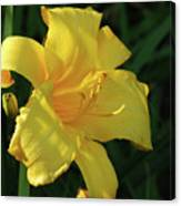 Amazing Yellow Lily Flowering In A Garden Canvas Print