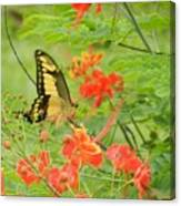 Amazonia Butterfly Canvas Print