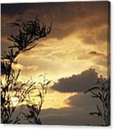 Amber Sky Canvas Print