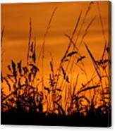 Amber Sundown Meadow Grass Silhouette  Canvas Print