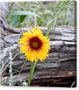 Amber Wheels Blanket Flower Canvas Print