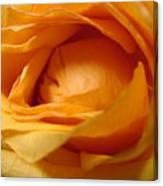 Amber's Rose Canvas Print