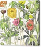 Ambrosia Vi Canvas Print