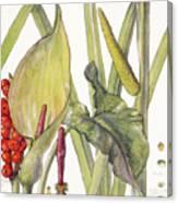 Ambrosia Xii Canvas Print