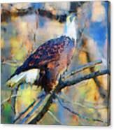 American Bald Eagle  Canvas Print