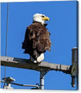 American Bald Eagle On Communication Tower Canvas Print