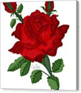 American Beauty Rose Canvas Print