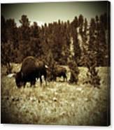 American Bison Vintage 2 Canvas Print