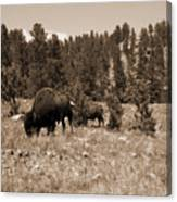 American Bison Vintage Canvas Print