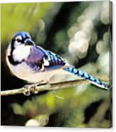 American Blue Jay On Alert Canvas Print
