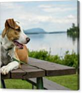 American Breed On Table Canvas Print