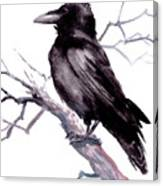 American Crow Canvas Print
